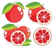 Vektorillustrationen der rosa Pampelmusen Lizenzfreies Stockfoto