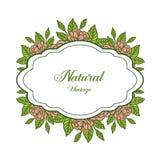 Vektorillustrationen som var dekorativ av naturlig tappning med utsmyckat av bladet, steg blommaramar vektor illustrationer