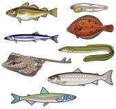 Vektorillustrationer av havet Fish-4 stock illustrationer