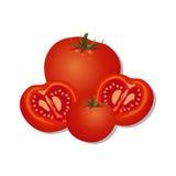 Vektorillustrationer av nya tomater som isoleras på vit bakgrund Royaltyfri Bild