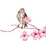 Vektorillustrationfågel på filial av sakura Royaltyfri Bild