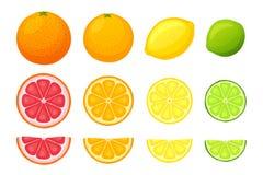 Vektorillustrationssatz Zitrusfrüchte vektor abbildung