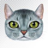 Vektorillustrationstående av den Abyssinian katten vektor illustrationer