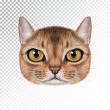 Vektorillustrationstående av den Abyssinian katten stock illustrationer