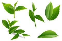 Vektorillustrationuppsättning av en collage av gröna teblad royaltyfri illustrationer