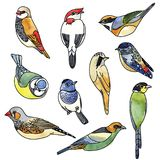 Vektorillustrationuppsättning av fåglar grupper som tecknar spolning för vattenfärg för blomningflodtrees royaltyfri foto