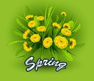 Vektorillustrationvår på bakgrund med våren blommar
