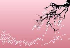 Vektorkirschblüte-Zusammenfassungshintergrund Vektor Abbildung