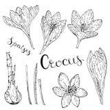 Vektorkort med krokusar vektor illustrationer
