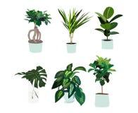 Vektorkrukväxtillustration philodendron palmträd, orkidé, blomma i vas Beståndsdelar för inredesign hem- dekorgarnering Arkivfoto
