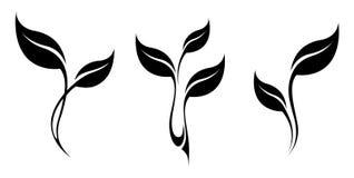 Vektorkunst-Logosatz Stilisiertes Schattenbild des Federblattes lokalisiert Lizenzfreies Stockfoto