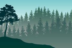 Vektorlandskapet med detaljerad gräsplan varvade den dimmiga skogen Royaltyfri Fotografi