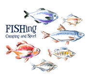 Vektorlogo-Designschablone der frischen Fische Meeresfrüchte Lizenzfreies Stockfoto