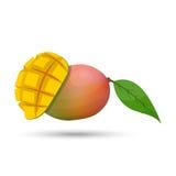 Vektormango auf weißem Hintergrund Stockfotos