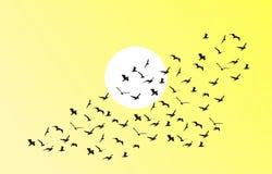 Vektormenge von Fliegenvögeln in Richtung zum hellen Sonnenschein Lizenzfreie Abbildung