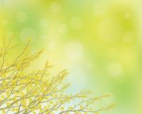 Vektormimosenblumen auf Frühlingshintergrund. Stockbilder