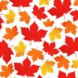 Vektormuster des Herbstlaubs Rotes, orange, gelbes Ahornblatt auf einem weißen Hintergrund Hintergrund für Packpapier Stockbild