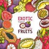 Vektorn skissar affischen av exotiska frukter för fruktaffären Fotografering för Bildbyråer