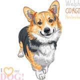Vektorn skissar att le för den hundPembroke Welsh corgien Royaltyfria Bilder