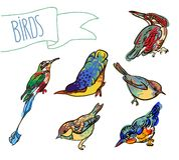 Vektorn skissar av fågel, ställde in Royaltyfri Bild