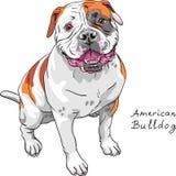 Vektorn skissar den amerikanska bulldoggaveln för hunden royaltyfri illustrationer