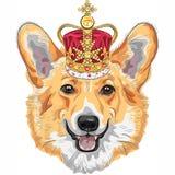 Vektorn skissar den hundPembroke Welsh corgien som ler i guld- krona Fotografering för Bildbyråer