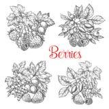 Vektorn skissar symboler av nya bär och frukter vektor illustrationer