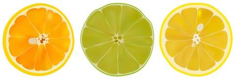 Vektorn ställde in av den citrusfruktlimefrukt, apelsinen och citronen Isolerad skivad citrus på vit bakgrund Citrusa halvor stock illustrationer