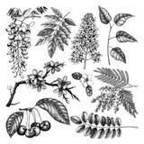 Vektorn ställde in av den drog handen blomstra trädillustrationen för 8 tilläggsdesignelement för eps för format för fjäder vekto stock illustrationer