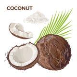 Vektorn ställde in av den hela kokosnöten, halvan och stycket, kokosnötflingor, palmblad royaltyfri illustrationer