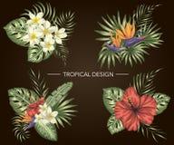 Vektorn ställde in av tropiska sammansättningar med hibiskusen, plumeria, strelitziablommor, monstera vektor illustrationer