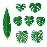 Vektorn ställde in av tropiska sidor, blommor vektor illustrationer
