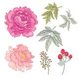Vektornahtloses Blumenmuster Stockbilder