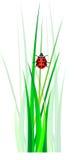 Vektornyckelpiga i grönt gräs Arkivfoton