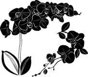Vektororchidee Lokalisiertes Orchideenillustrationselement auf weißem Hintergrund stockfotografie