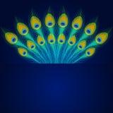 Vektorpåfågelfjädrar på blå bakgrund Arkivfoton