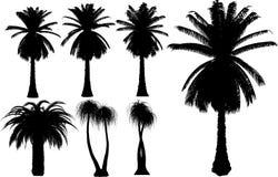 Vektorpalmen und -bäume lizenzfreie abbildung