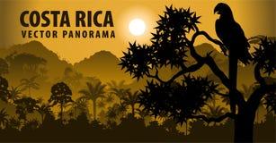 Vektorpanorama av Costa Rica med för witharamakaw för djungel den mest raimforest papegojan stock illustrationer