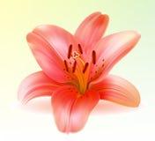 Vektorphoto-realistic rosafarbene Lilie stock abbildung