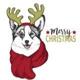 Vektorporträt des Weihnachtshundes Waliser-Corgihundetragende Rotwildhornkante und -schal Gebrauch für Grußkarte, Dekoration Lizenzfreies Stockfoto