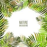 Vektorram med kokosnötpalmblad Blom- sommarbakgrund med tropiska gröna sidor vektor illustrationer
