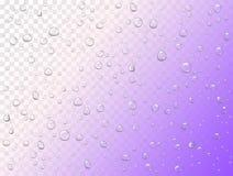 Vektorregenwassertropfen auf transparentem Hintergrund Reine Tröpfchen kondensiert Realistisches Muster auf Fensterglasoberfläche lizenzfreie abbildung