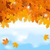 Vektorrote Ahornblätter auf Hintergrund des blauen Himmels Stockbilder