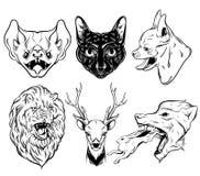 Vektorsamling av den hand drog realistiska illustrationen av djur Arkivfoton