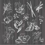 Vektorsamling av drog kryddor och örten för färgpulver den hand Arkivfoto