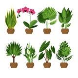 Vektorsamling av inomhus, husväxter i krukor Fotografering för Bildbyråer