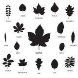 Vektorsamling av leafsilhouettes Arkivbilder