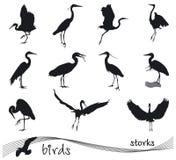 Vektorsamling av storkkonturer stock illustrationer