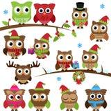 Vektorsamlingen av jul semestrar Themed ugglor och filialer Arkivfoton