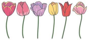 Vektorsamlingsuppsättning med 6 härliga utdragna blommor för tecknad filmtulpanvår i olika färger royaltyfri illustrationer